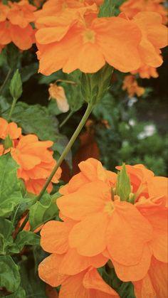 Instagram, Flowers, Plants, Wallpapers, Wallpaper, Plant, Royal Icing Flowers, Flower, Florals