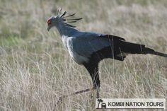 Secretary bird! For more information on Uganda's wildlife, please visit our website.