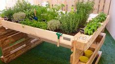 Organiser son potager : 9 idées inspirantes à mettre en pratique dès aujourd'hui Pallet Garden Benches, Vertical Pallet Garden, Outdoor Pallet Projects, Herb Garden Pallet, Vegetable Garden, Pallet Planters, Pallet Gardening, Potager Palettes, Recycling