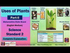 E Learning, Smart School, Rubber Plant, Science Standards, Science For Kids, Education, Clever School, Ficus Elastica, Onderwijs