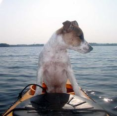 Love being with you, love being on the kayak, and yet I really want to swim. Decisions, decisions, decisions