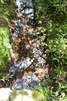 Projeto 365 Inspirações - FOTO 56  #365inspiracoes #reflection #reflexo #agua #water