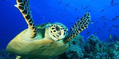 Demand a stronger recovery plan to save the Great Barrier Re... - Care2 News Network