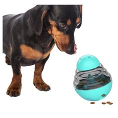Replace your standard bowl with our slow feeder dog bowl to make mealtime fun! This combination of slow feeder and treat puzzle will help slow down your dog's eating pace while exercising your dog's mind. 🐶 Benefits: dog games for dog brain games. Interactive toys for dogs and puzzle for dogs. dog chew toys. Dog Treat Toys, Dog Chew Toys, Dog Treats, Brain Games For Dogs, Dog Games, Slow Feeder, Cat Feeder, Dog Feeding Bowls, Dog Bowls