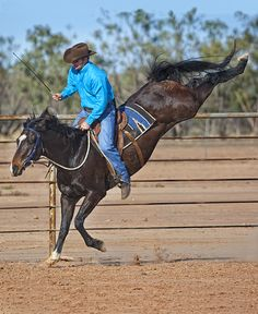 First, let's define what bucking really is. What a lot of people call bucking is when the horse's front legs stay on the ground and he kicks up his back legs. That's not bucking. Bucking to me is what you see at the rodeo: All four feet are off the ground, the horse's head is …