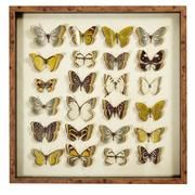 Voyager 3D Butterfly Framed Print