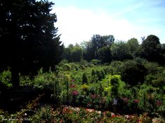 Jardin de Giverny