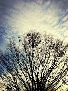 Winter's Bone | EyeEm