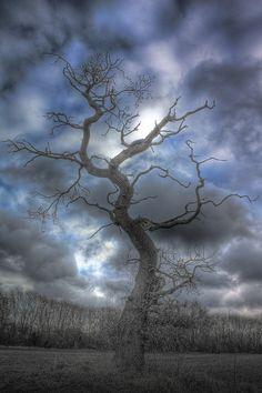 """ winter tree share moments """