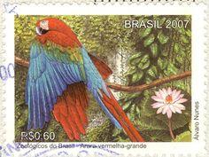Brasil (Brazil) 2007 - R$0,60 stamp (beautiful parrot!)  Zoologicos do Brasil - Arara vermelha-grande  Alvaro Nunes
