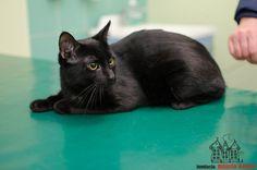 Maks is looking for a home ... #cute #cutecats #cats #caturday #kot #koty #neko #gato #katz #katzen #kittens #chat