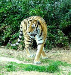 An extraordinary animal