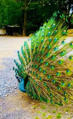 Funny Birds, Cute Birds, Pretty Birds, Cute Funny Animals, Cool Pictures Of Nature, Beautiful Photos Of Nature, Beautiful Nature Wallpaper, Unusual Animals, Majestic Animals