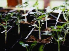 Kasvukauteen varaudutaan nikkaroimalla taimille vähän tilaa vievä ja käytännöllinen taimihylly.