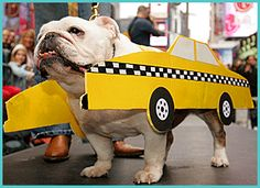 Calling all K9 cabs!  Pet friendly taxis in NYC.