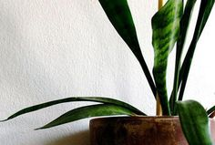15 houseplants to improve indoor air quality | MNN - Mother Nature Network