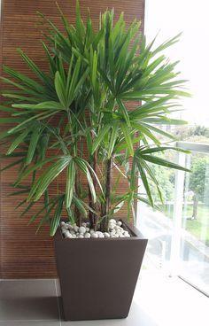 Vaso marrom com palmeira Rooftop Garden, Indoor Garden, Indoor Plants, Garden Plants, House Plants Decor, Plant Decor, Plantas Indoor, Office Plants, Deco Floral