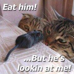 oh my, the things that make me laugh!