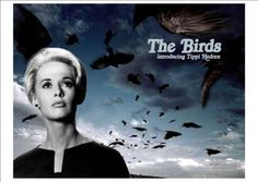 """The Birds""-Alfred Hitchcock: Rod Taylor, Tippi Hedren, Jessica Tandy, Suzanne Pleshette🎥 Scary Movies, Old Movies, Great Movies, Horror Movies, Awesome Movies, Tippi Hedren, Entertainment Weekly, Movie Taglines, The Birds Movie"