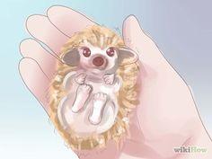 How to Tame a Hedgehog.