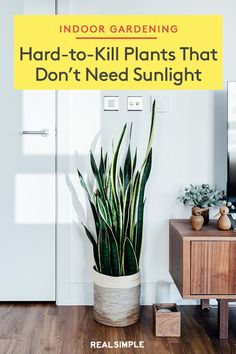 Hard-to-Kill Plants That Don't Need Sunlight | These are the best low-maintenance houseplants that are incredibly hard to kill and will flourish in harsh climates and conditions. #gardening #gardenideas #realsimple #houseplant #besthouseplant Lavender Plant Care, Lavender Plants, Brown Low Lights, Zen Room, Low Light Plants, Home Organisation, Bedroom Plants, Faux Plants, Homekeeping