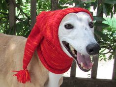 ALL PETS SHOULD BE DRESSED FOR WINTER JUST LIKE HUMANS, THEY GET COLD TOO!!  I LOVE THE LADY WHO PUT THIS CUTE HAT UP!!!  Knitted Pointy Dog Hood FREE Pattern