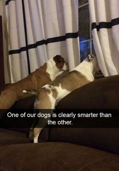10 Hilarious Dog Snapchats That Are Impawsible Not To Laugh At (Part 2)