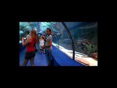 AQUARIUM ANTALYA The world's biggest tunnel aquarium Antalya, Aquarium, Big, World, Goldfish Bowl, Aquarium Fish Tank, The World, Aquarius, Fish Tank