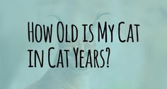 How Old Is My Cat in Cat Years?