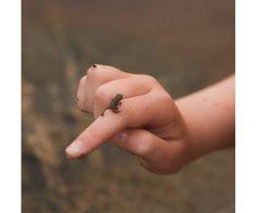 tiny tiny frog