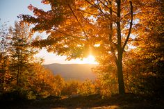 Gal Meets Glam Stowe Vermont Fall Foliage on We Heart It Autumn Cozy, Autumn Trees, Autumn Leaves, Autumn Scenery, Fall Pictures, Fall Photos, Stowe Vermont, Autumn Aesthetic, Orange Leaf
