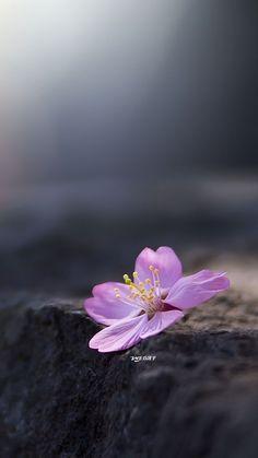 Beautiful Flowers Wallpapers, Beautiful Nature Wallpaper, Love Wallpaper, Wallpaper Ideas, Nature Iphone Wallpaper, Rain Wallpapers, Floral Wallpapers, Pretty Flowers, Purple Flowers