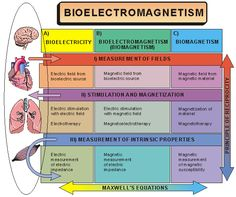 facts about heart electricity and electromagnetic field   Human Electromagnetic Field