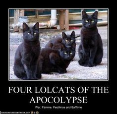 Four Lolcats