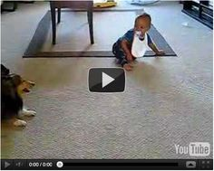Baby Laughing at Dog. Who's having more fun, the baby or the dog. Aww they love each other!