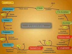 Como recordar el CICLO DE KREBS de una manera muy fácil - Medicina mnemotecnias