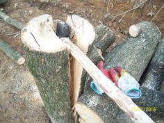 split[chop] firewood