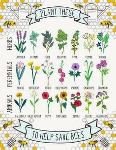 The Haunted Gardens: Save the Bees...Plant These!