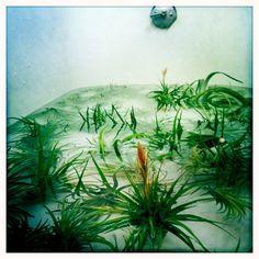 amykaneko_airplants in the tub