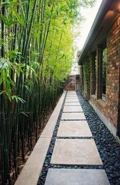 steppingStones Hardscaping walkway backyardLandscaping backyardLandscapingIdeas landscaping cheapLandscapingIdeas backyard landscaping curbAppeal backyard stepping stones backyard stepping stones walkway and bamboo plants as a fence # Side Yard Landscaping, Cheap Landscaping Ideas, Backyard Fences, Fence Ideas, Walkway Ideas, Cozy Backyard, Backyard Ideas, Backyard Privacy, Mailbox Landscaping