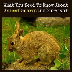 When it comes to long-term survival under dire circumstances, many of us will need to step outside our personal comfort zone and use snares to trap animals for food.  This article will help you become familiar with animal snares for survival.    What You Need To Know About Animal Snares for Survival | Backdoor Survival