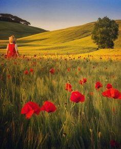 Tuscany poppies fields, Italy   by Daniel Kordan