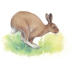 Metsä kuvat - Kiertävä luontokoulu Naakka Kangaroo, Dinosaur Stuffed Animal, Rabbit, Animales, Baby Bjorn, Bunny, Rabbits, Bunnies