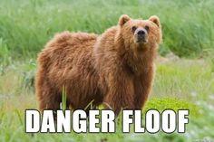 bears are the danger floof