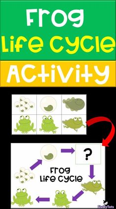 Frog Life Cycle Activity : FREE 6 Sequence Activity for Toddlers and Preschoolers - FluffyTots Frogs Preschool, Preschool Lesson Plans, Preschool Printables, Toddler Preschool, Toddler Fun, Frog Activities, Sequencing Activities, Kindergarten Activities, Preschool Activities