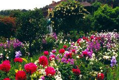 *¨ Monet's Giverny Gardens ¨*