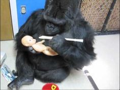 Koko Plays Wind Instruments