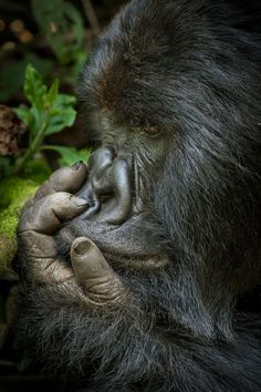 Pondering by Nelis Wolmarans on 500px
