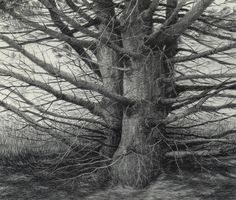 Stanley Maltzman  drew this beautiful charcoal of sister trees.