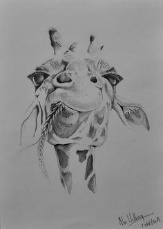 An impassive giraffe - Pencil drawing/Dessin au crayon/Dibujo a lápiz